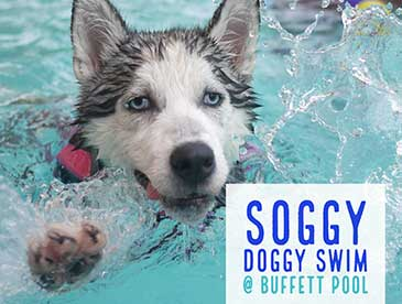Soggy-Doggy-feature-image